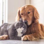 ペットと快適に暮らせる注文住宅にするためのポイント・注意点!